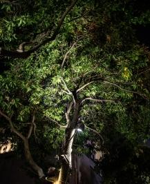 深圳市椰子灯